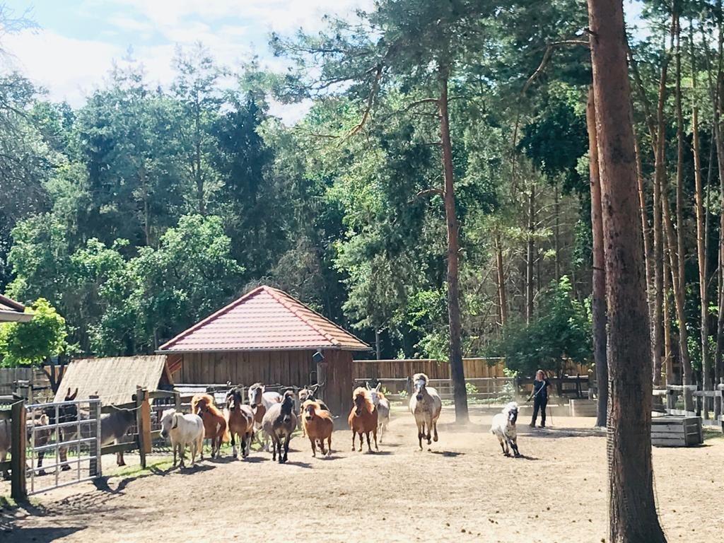 Täglicher Frühsport unserer Ponys und Esel
