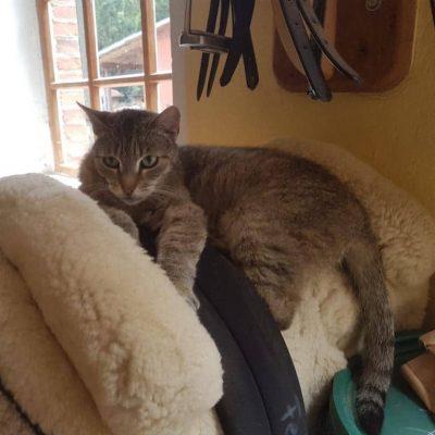 Nicht nur Menschen nehmen auf Sätteln platz, sondern auch Katzen