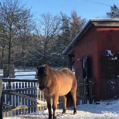 Swala im Schnee